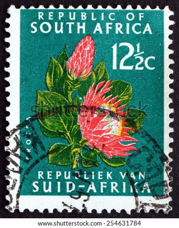 SOUTH AFRICA - CIRCA 1961: a stamp printed in South Africa shows Protea Flower, circa 1961 - stock photo