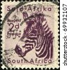 SOUTH AFRICA - CIRCA 1949: A stamp printed in South Africa shows zebra, series, circa 1949 - stock photo