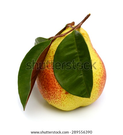 South African forelle pear fruit over white background