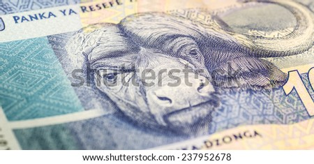 South African one hundred rand note close up 2 - stock photo