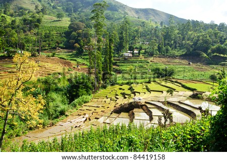 South Asian rice field terraces on Sri LAnka - stock photo