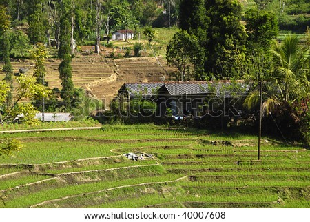 South Asian rice field terraces with old barn - stock photo
