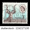 SOUTHERN RHODESIA - CIRCA 1964: A stamp printed in Southern Rhodesia shows Kudu, circa 1964 - stock photo