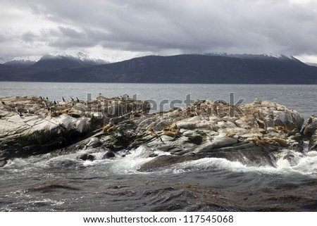 Southern Sea lions & Cormorants resting on the Islands of Tierra Del Fuego, Ushuaia, Argentina - stock photo