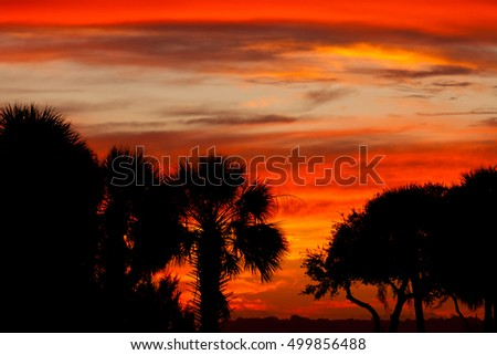 Southern sunset sky with palm and oak tree silhouettes, South Carolina, US