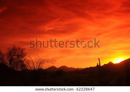 Southwestern Arizona Sunset with saguaro cactus and ocotillo - stock photo