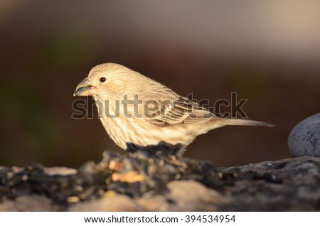 Southwestern wild birds of New Mexico deep woods of the desert forest - stock photo