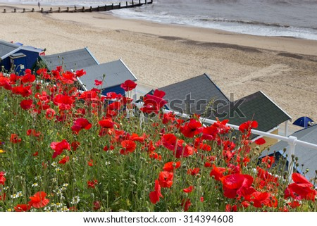 Southwold, Poppies and Beach Huts - stock photo