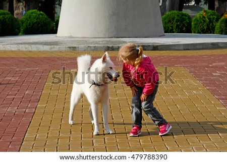 Sovetsk, Kaliningrad Region, Russia - August 6, 2016: Little girl playing with white siberian husky dog outside