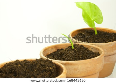 sow a plant in a clay pot - stock photo