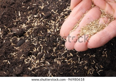 sowing hand and soil showing growth or agriculture concept - stock photo