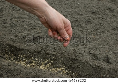 Sowing of seed in earth.  The hand of man sows seed in earth