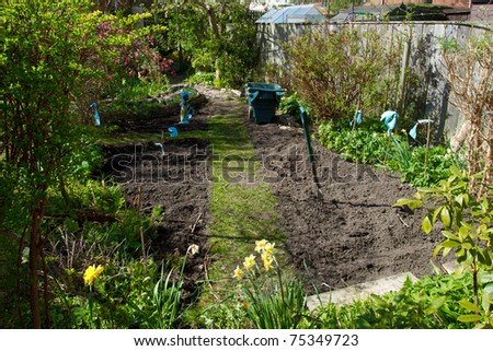 sowing seeds in Urban vegetable patch in domestic english garden