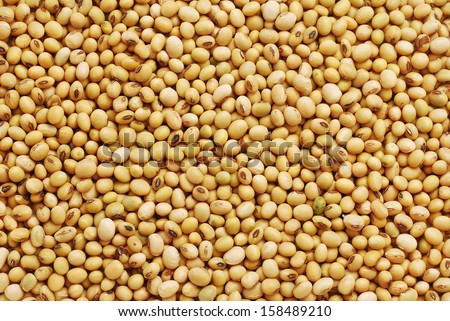 soy bean background texture detail - stock photo