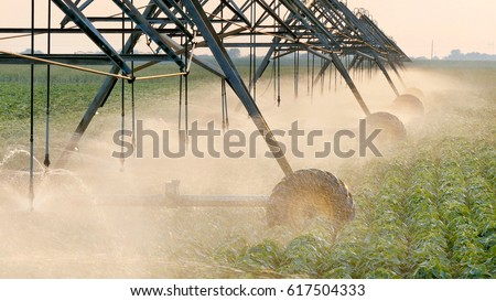 Soy bean field with Irrigation system for water supply in sunset