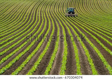 Soy bean row farm with a Tractor in Niseko Hokkaido Japan summer