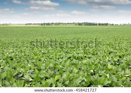 soya bean field landscape agriculture