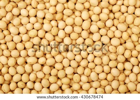 Soybean background - stock photo