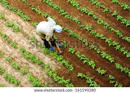 soybean farmers - stock photo