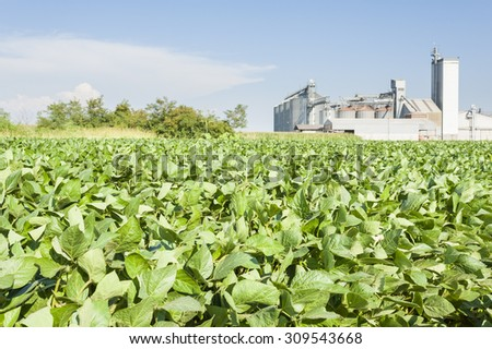 Soybean field on a summer day - stock photo
