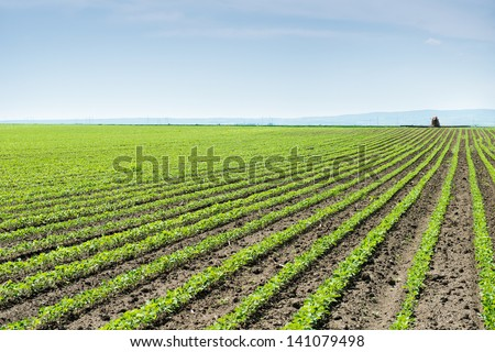 Soybean Field Rows in spring - stock photo