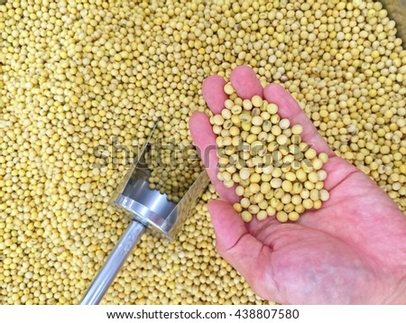 Soybean on hand and dipper - food background of soybean,     - stock photo