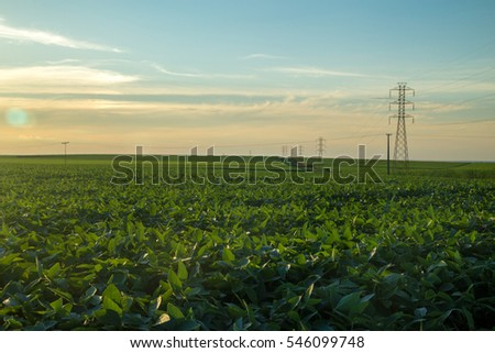 Soybean plantation