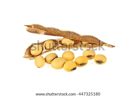Soybean pods isolated on white background. Soya - protein plant for health food