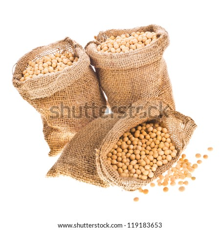 soybeans - three open their canvas bag soybeans isolated on white background