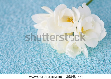 Spa background: blue towel and white freesia. Shallow DOF - stock photo