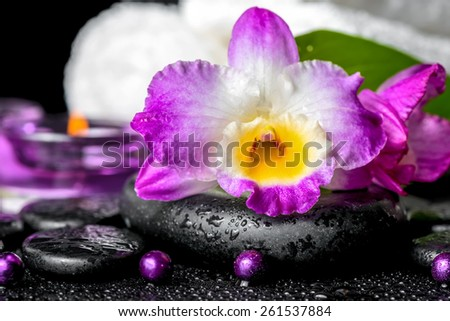 spa background of orchid dendrobium, green leaf Calla lily, purple candles, towels and beads on zen stones with drops - stock photo