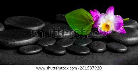 spa background of purple orchid dendrobium and green leaf Calla lily with drops on black zen stones, panorama - stock photo