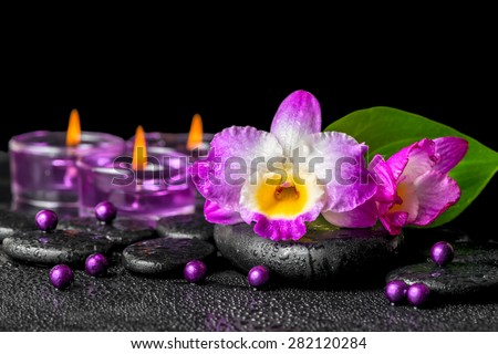 spa background of purple orchid dendrobium, green leaf Calla lily and candles on black zen stones with drops, closeup   - stock photo