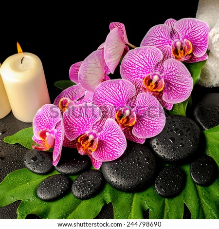 spa background of zen stones with dew, blooming twig stripped violet orchid (phalaenopsis), stacked towel and candles on leaf - stock photo