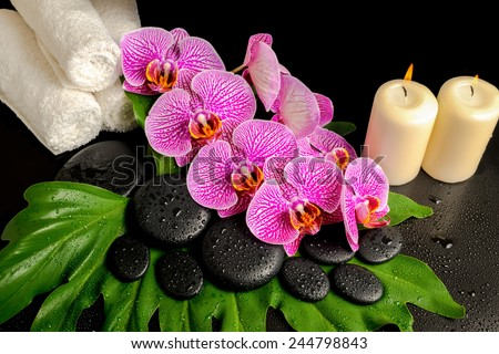 spa background of zen stones with dew, blooming twig stripped violet orchid (phalaenopsis), stacked towel and candles on green leaf