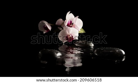 Spa background with beautiful delicate pink phalaenopsis orchids on massage stones reflected in cool pure water on a dark background with copyspace. - stock photo
