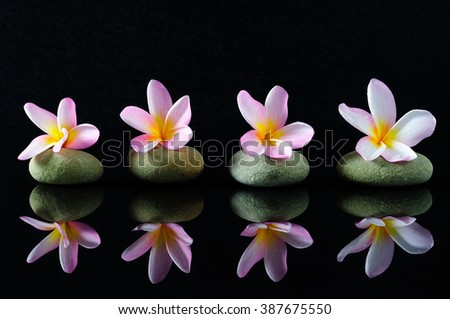 Spa, beauty and wellness concept - Frangipani flowers on a zen stones with reflection, dark background.  - stock photo