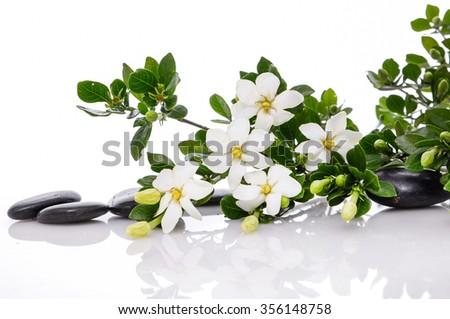 spa concept  gardenia flower with black stones - stock photo