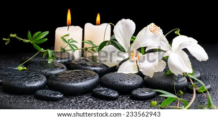 spa concept of blooming white hibiscus, twig with tendril passionflower and candles on zen basalt stones, with drops, panorama
