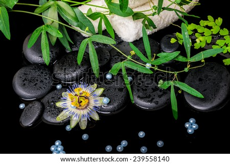 spa concept of passiflora flower, green  branches, towels, zen basalt stones with drops and pearl beads in dark water