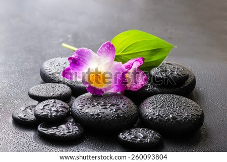 spa concept of purple orchid dendrobium and green leaf Calla lily with dew on black zen stones - stock photo
