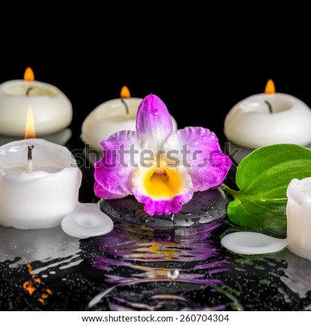 spa concept of purple orchid dendrobium, green leaf with dew and candles on black zen stones in ripple reflection water, closeup   - stock photo