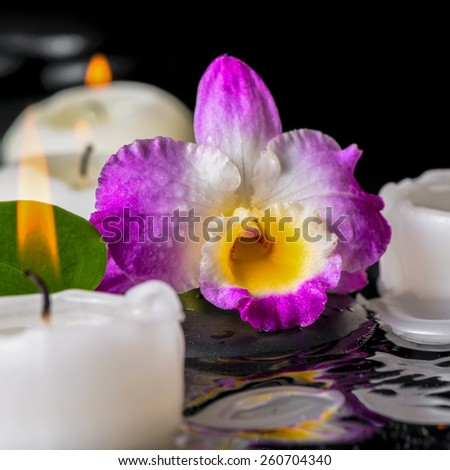 spa concept of purple orchid dendrobium, leaf with dew and candles on zen stones in ripple reflection water, closeup   - stock photo