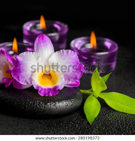 spa concept of purple orchid dendrobium, twig bamboo with dew and candles on black zen stones, closeup