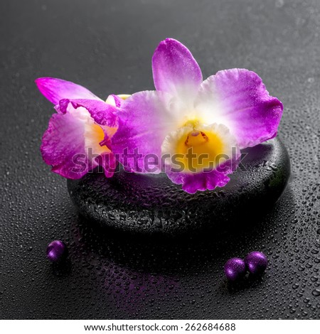 spa concept of purple orchid dendrobium with dew and pearl beads on black zen stone, closeup   - stock photo