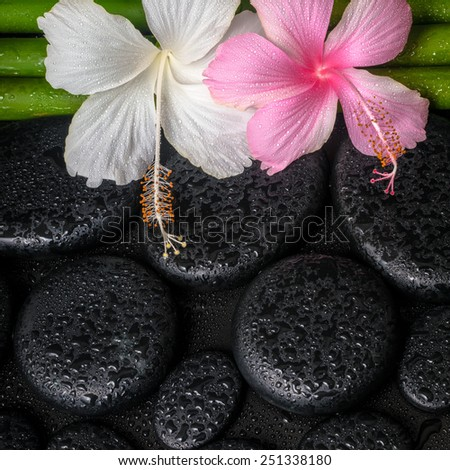 spa concept of zen basalt stones, white, pink hibiscus flower and natural bamboo with drops, closeup  - stock photo