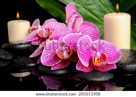 spa concept of zen stones with drops, blooming twig stripped violet orchid (phalaenopsis), candles, big green leaf on water - stock photo