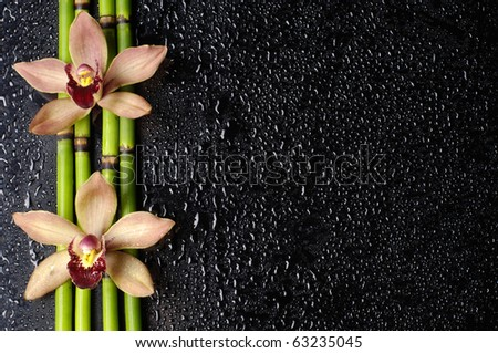 spa concept- orchid with bamboo grove on black