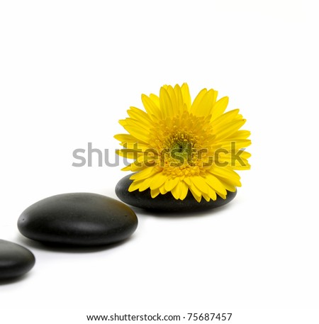 Spa concept- spa yellow sunflower on black rocks