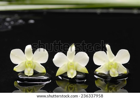 spa concept �two white orchid with stones and green plant  - stock photo